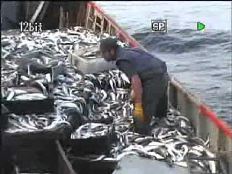 Un dia de pesca merluza Buque Paola S