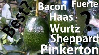 Which Avocado Tree is Best? Bacon   Fuerte   Haas   Pinkerton   Sheppard   Wurtz
