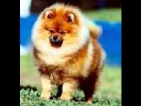 Os 10 Cachorros Mais Caro do Mundo.