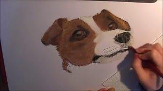 Jack Russel Terrier Speedpainting