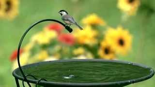 Wild Birds Unlimited - Drip-or-Mist