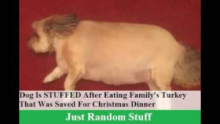 Dog Is STUFFED After Eating Family