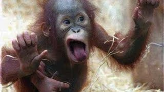 A Cute and Funny Monkey Videos - Funny Monkeys Compilation 2017