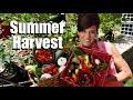 Organic Garden Summer Harvest - July, 2017