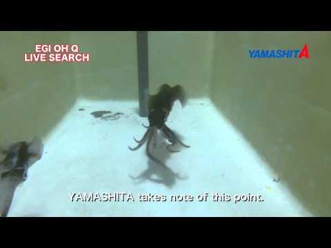 Yamashita EGI OH Q LIVE SEARCH explanation