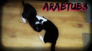 القطط المتوحشة! - ArabTub3