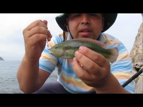 Pesca y Liberacion de Pez Loro en El Rodadero Santa Marta Colombia