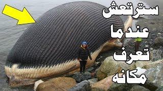 هل تعلم أن الحوت الذي ابتلع سيدنا يونس لا يزال حي ليومنا هذا ؟ شاهد الحقيقة كاملة