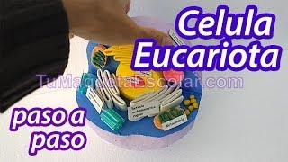 Como Hacer Maqueta Celula Eucariota Animal