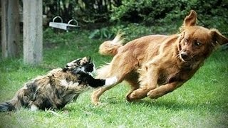 Dogs Afraid of CATS ★ YOU Shall NOT Pass, DOG! [Funny Pets]