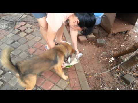 Feeding stray dogs in Indonesia . Please Share!