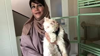 شابة خليجية وحيدة، تأوي مئات القطط lonely girl helpings hundreds cats