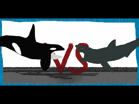 Pivot Battle Arena Orca VS Great White shark