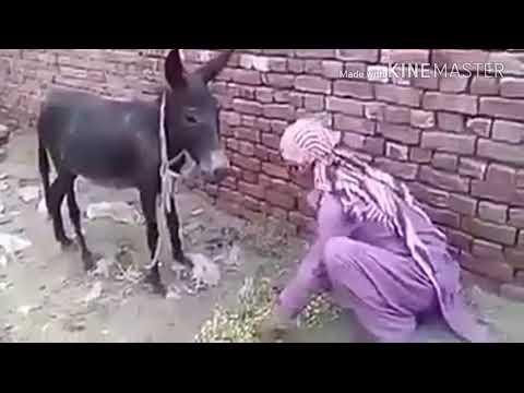 Xxx Mp4 Toba Toba Insan Itna Hawas Ka Bokha Hogaya He K Janwar Ko B Ni Chora Us K Sath B Sex Karte He 3gp Sex