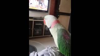 SAMSUNG WHISTLE by mithu. talking parrot