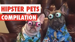 Hipster Pets Video Compilation 2017