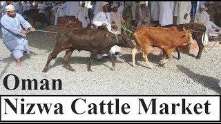 Oman/Nizwa Cattle Market 3 نزوى سوق الماشية Part 26