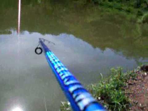 pesca cachama colombia medellin mas 2 kilos