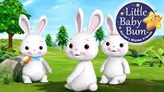 Bunnies Bunnies | Nursery Rhymes | Original Song By LittleBabyBum!