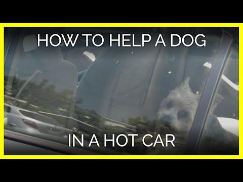 Xxx Mp4 What To Do When You See A Dog In A Hot Car 3gp Sex