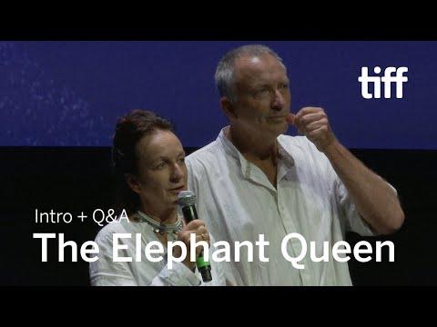 Xxx Mp4 THE ELEPHANT QUEEN Directors Q Amp A Sept 8 TIFF 2018 3gp Sex
