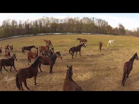 Xxx Mp4 Horse Breeding Farm 3gp Sex