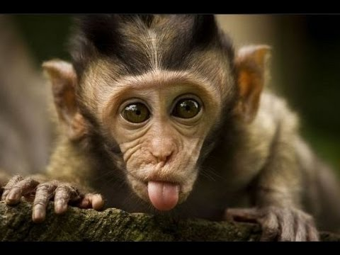 Funny monkeys will make you laugh hard - Funny and cute compilation - Must watch!