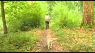 """Printemps (""""Quatre saisons en forêt """", Film 3)"""