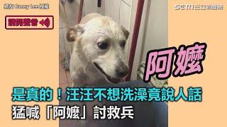 是真的!汪汪不想洗澡竟說人話 猛喊「阿嬤」討救兵 三立新聞網SETN.com