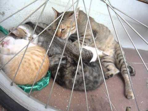 Xxx Mp4 Mama Cat Nursing Kittens 3gp Sex
