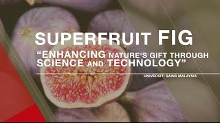From LAB to FARM  (SUPERFRUIT - FIG)