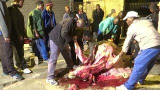 uMemulo ka Thando Siphesihle  Hlongwa