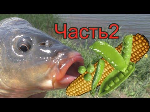 Какая рыба клюет на консервированный горошек