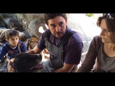 Сидер и Еле� а спасители � а каракача� ските породи куче овца и ко�