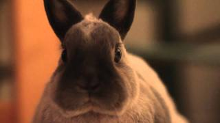 Serious bunny swearing - censored