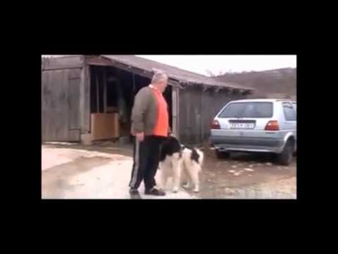 LOST SHEPHERD DOG IN BULGARIA