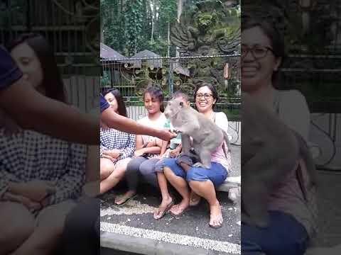Xxx Mp4 Funny Monkey Video Xxx Kabhi Kabhi Aisa Bhi Ho Jata Hai 3gp Sex