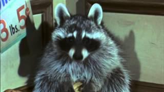Rascal - Trailer