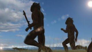 Human Evolution | Curiosity