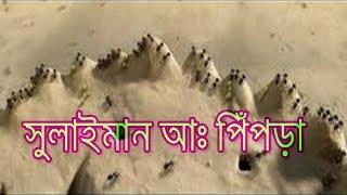 ✅ হযরত সুলাইমান (আঃ)এর পিঁপড়া   The Ants Of Suleiman   হেরার জ্যোতি-Ray Of Hera  
