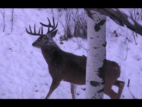 Xxx Mp4 The Most AMAZING Deer Hunting Video EVER HD 3gp Sex