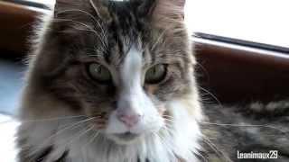 I'm a cat, Check Meow !