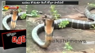15 Feet Long King Cobra Found in Odisha