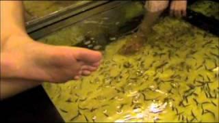 Fish Spa (fish eating feet)
