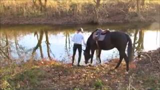 horse first time in water