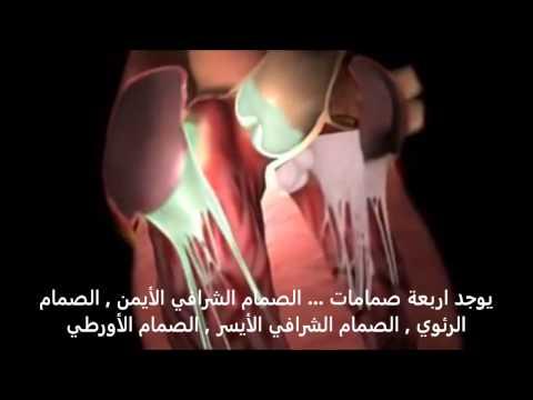 Xxx Mp4 الدورة الدموية داخل القلب وكيفية عمل القلب 3gp Sex