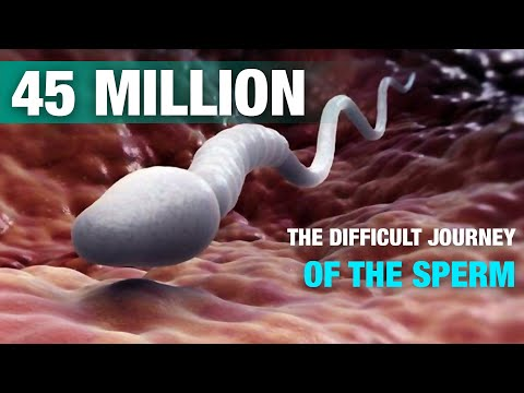 Xxx Mp4 The Difficult Journey Of The Sperm Signs 3gp Sex
