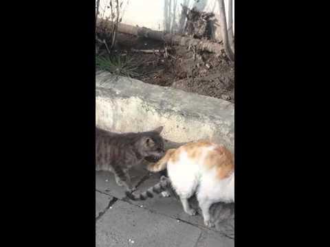 Xxx Mp4 Sex Fuke Cat 3gp Sex