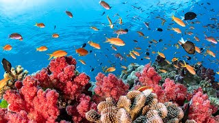 Austraila's Great Barrier Reef || Full Documentary with subtitles