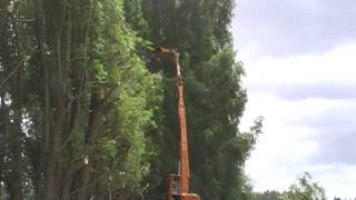 Tree Topping and trimming New Zealand